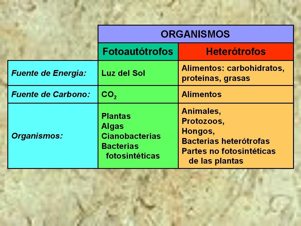 Fotosistema 1 y 2 diferencias 44