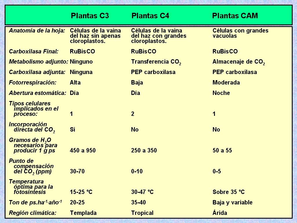 Fotosintesis C3 C4 Y Cam Ppt Sepeda Triathlon Polygon Helios 560 700c 2010