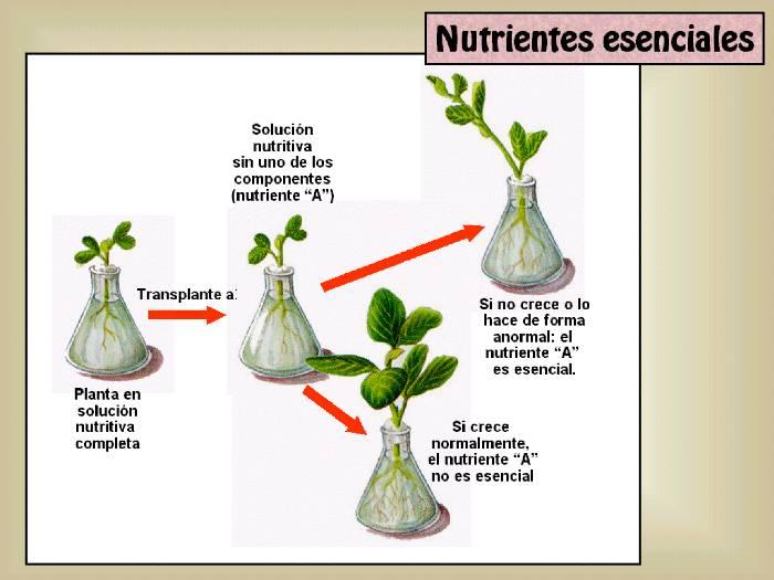 Tema 12: El agua en las plantas. Nutrición y transporte de elementos ...