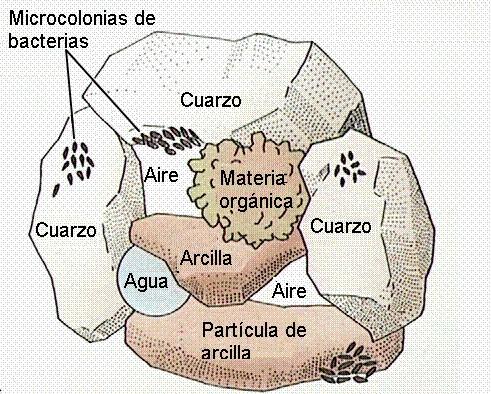 Tema 12 el agua en las plantas nutrici n y transporte de for Que elementos conforman el suelo